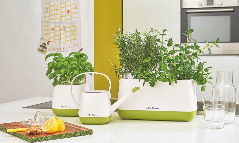 frische kr uter f r den sommer anpflanzen. Black Bedroom Furniture Sets. Home Design Ideas