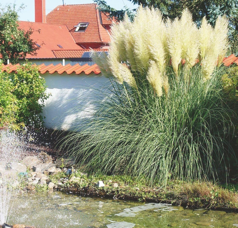 Rauschendes Schilf Im Garten
